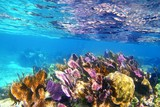 Caribbena coral reef Mayan riviera colorful - 31671335