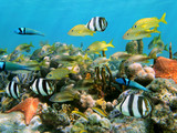 Corals and fish - 40441780