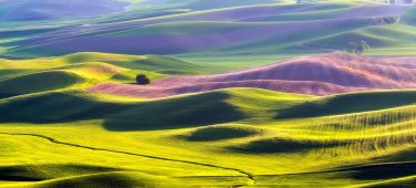 Palouse's Rolling Hills