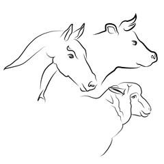 Photos, illustrations et vidéos de vache