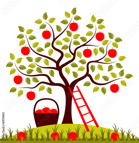 """apple harvest"" stock"
