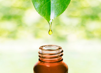Herbal essential oil dropping from fresh leaf to the bottle.