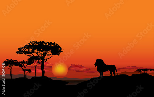African landscape with animal lion silhouette Savanna
