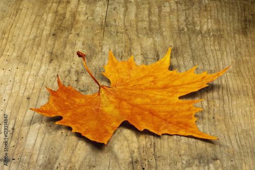 Maple Leaf Hardwoods
