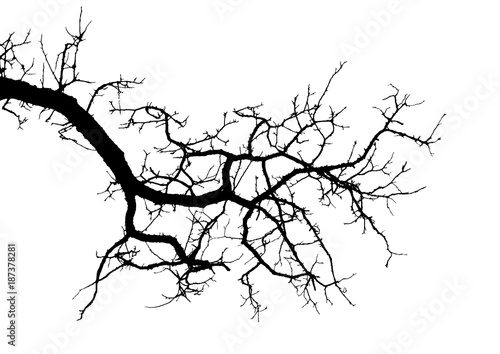 20 Overhanging Tree Branches Clip Art Ideas And Designs