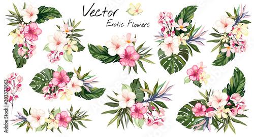 set tropical vector flowers