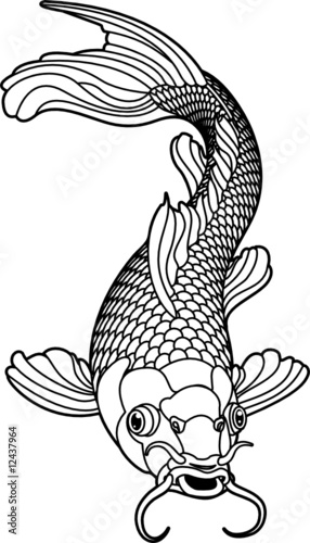 Koi Carp Black And White Fish Stock Image And Royalty