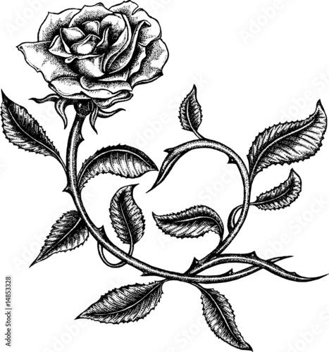 Black rose schwarze Rose Stockfotos und lizenzfreie