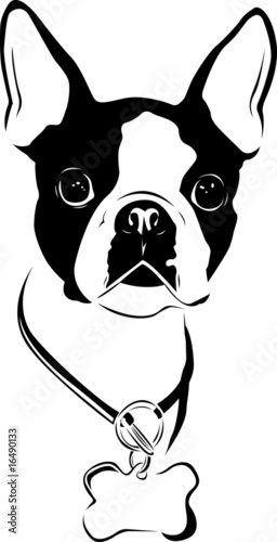 Cute Frenchie Wallpaper Quot Boston Love Boston Terrier Quot Stock Image And Royalty
