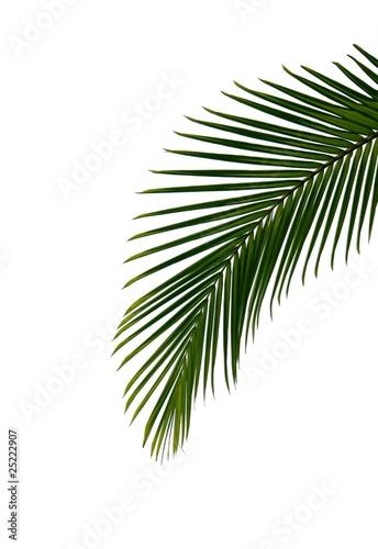 palmenblatt Stockfotos und lizenzfreie Bilder auf