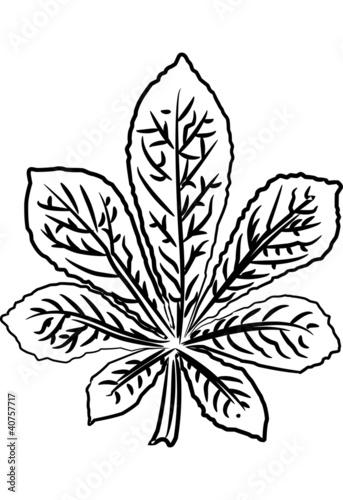 Kastanienbaum Malvorlage