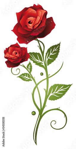 Rote Rosen mit Blttern Symbol der Liebe In love