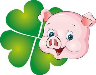 Bilder und Videos suchen schweinerei