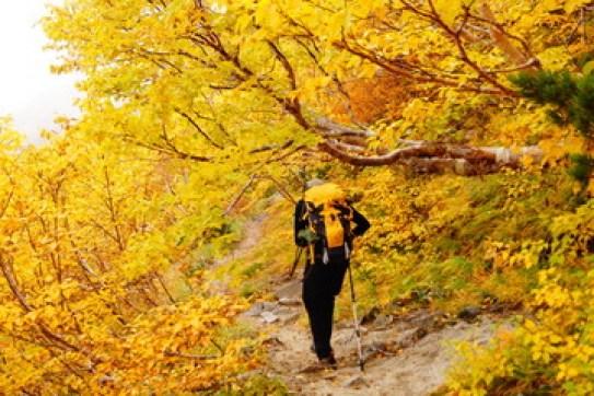 紅葉の登山