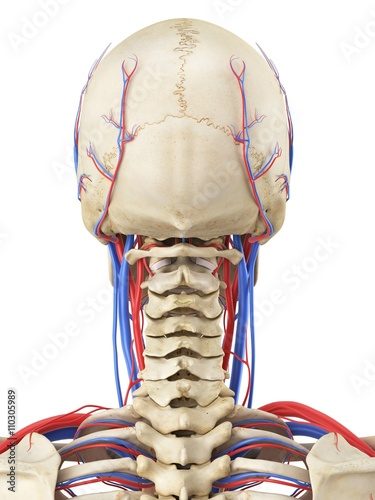 human vascular anatomy diagram well pump control box wiring system illustration stock photo and royalty free