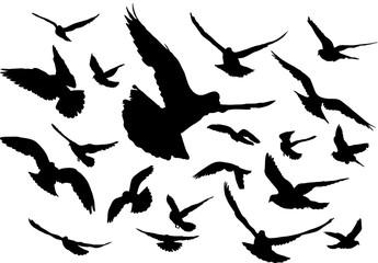 Search photos bird