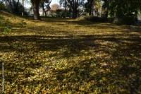 """Fall colors, Korean Garden, Los Angeles County Arboretum ..."
