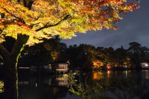 兼六園ライトアップ 秋の段 幽玄空間
