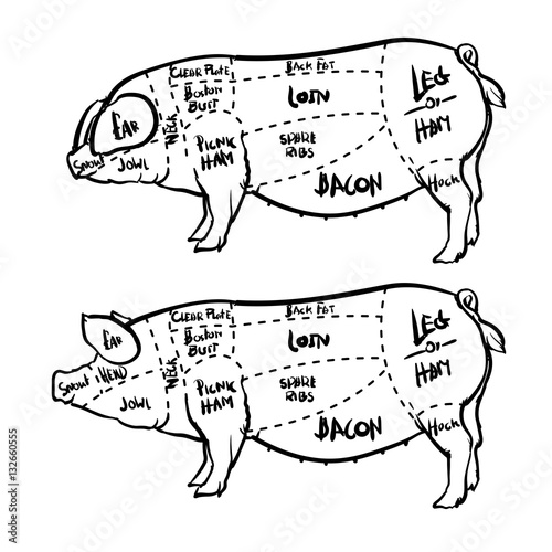 pork butcher cuts diagram brushless motor wiring and butchery vector illustration