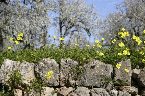 Blhende Blumen im Frhling auf Mallorca Balearen