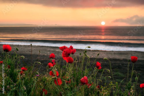 Seascape with poppies Magnificent sunrise view with