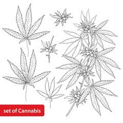 Buscar fotos: cannabis