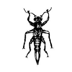 Buscar fotos: cucaracha