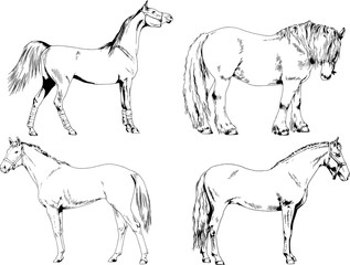 Racehorse Sketch stock photos and royalty-free images