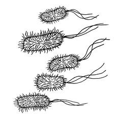 Search photos bacillus