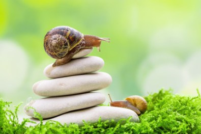 Snails business tips