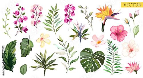 tropical vector flowers set