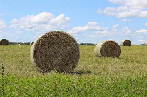 closeup of a hay