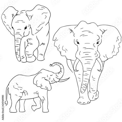 elephant sketches on white