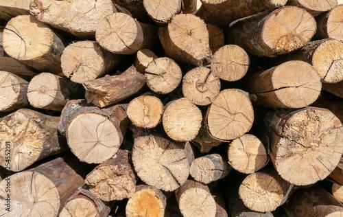 pile of cut tree