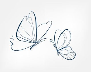 Butterfly Outline photos royalty free images graphics vectors & videos Adobe Stock