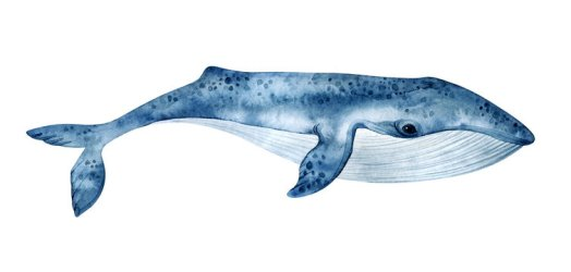 Whale Drawing photos royalty free images graphics vectors & videos Adobe Stock