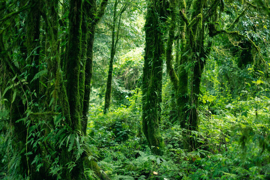 Designer read full profile one tree can start a forest; 40 Best Tropical Evergreen Forest Images Stock Photos Vectors Adobe Stock