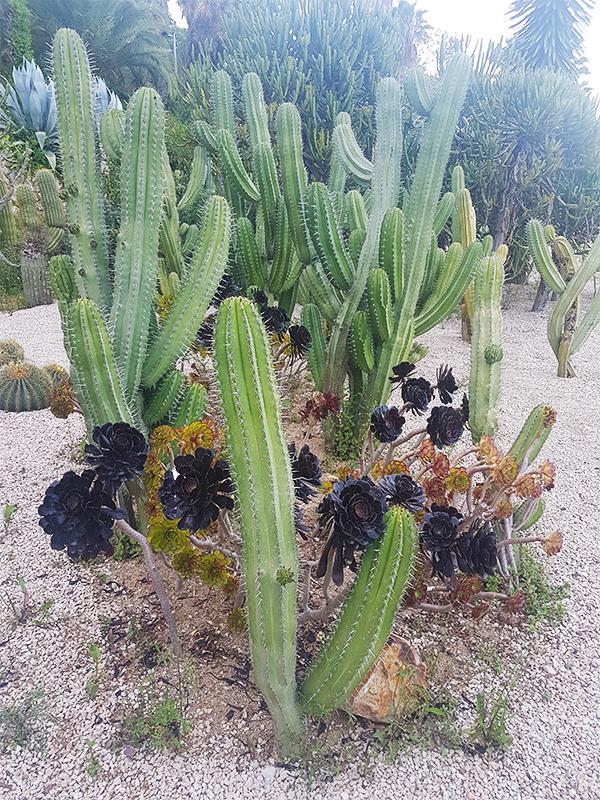 montjuic cactus park (1)