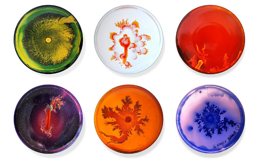 Bacterie