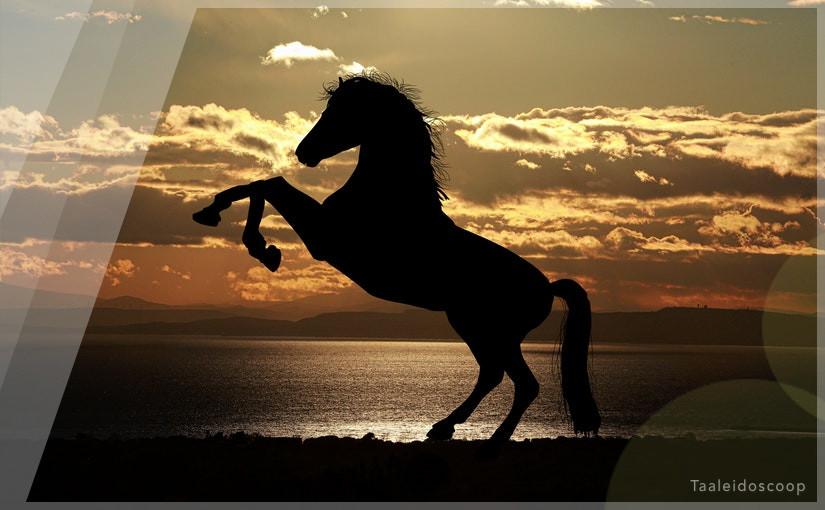 Snorharen, knuffeltjes en een paard