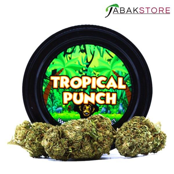 Tropical-Punch-CBD