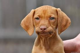 mildy-annoyed-puppy