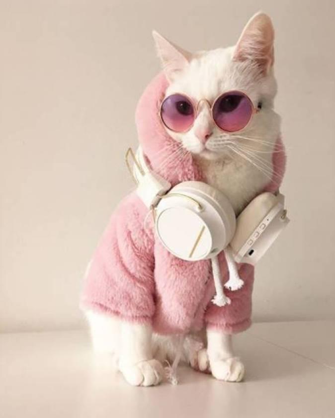 Gambar kucing lucu pakai kacamata