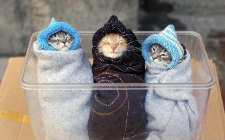 Kucing Lucu Banget Dan Imut Majalah Cat Dog