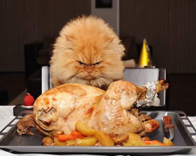 Gambar Kucing Ngambek godean.web.id