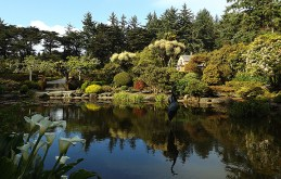 oriental-garden-and-lily-pond
