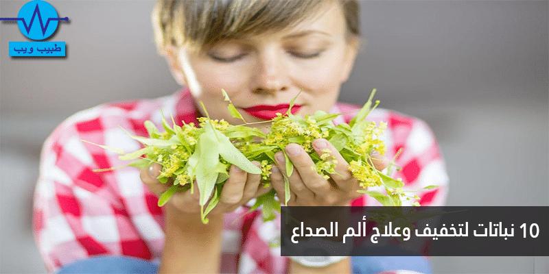 10 نباتات لتخفيف ألم وحدة الصداع