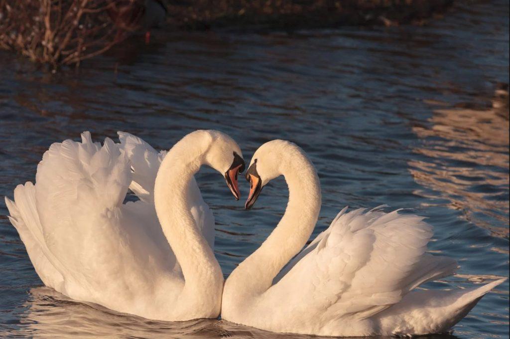 İki Kelimelik Aşk
