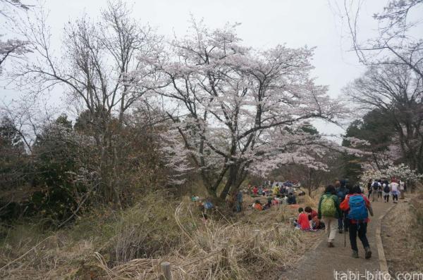 高尾山 桜
