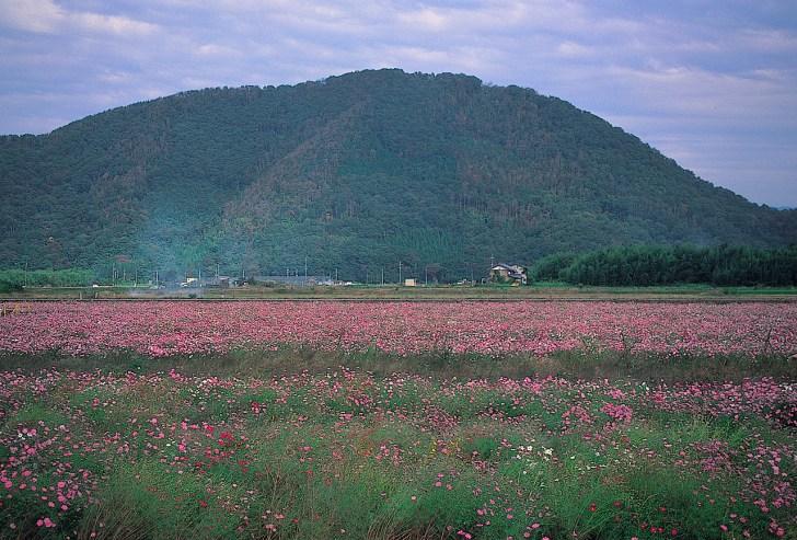 山麓から眺めた山本氏の本拠地、山本山